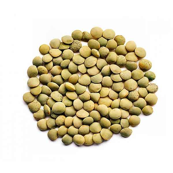 Dried Green Lentils – canned (2.27Kg)